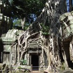 Door de jungle overwoekerde tempel