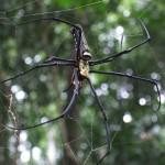 Ook hele grote spinnen zeker 25 cm groot!