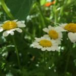 bloemen in het park