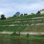 wijngaarde