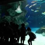Schoolklas bij het aquarium