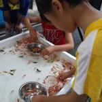 Visjes vangen met een rijstpapiertje